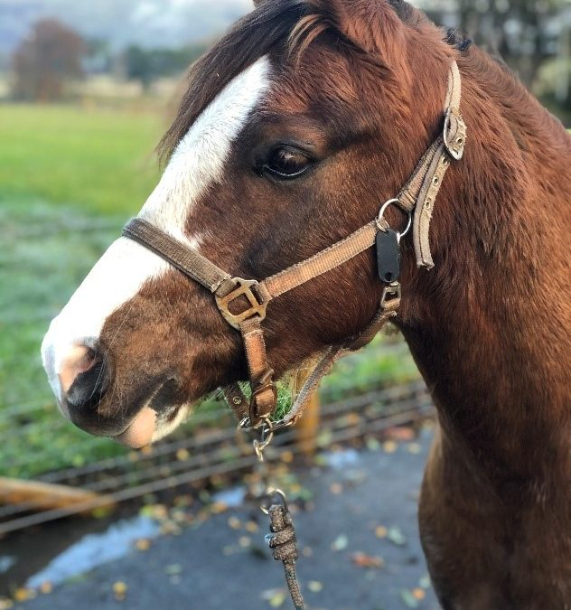February and April Pony Fun Days